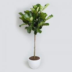 Offices Plants