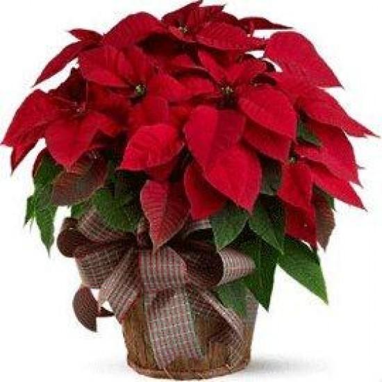 Merry Christmas to You
