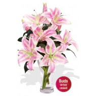 4 Oriental Pink Lily Vase Bouquet